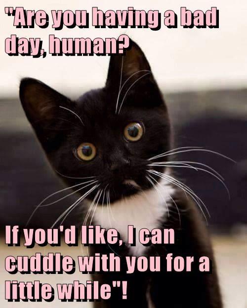 animals having cuddle Happy Kitten bad day caption - 8801614336