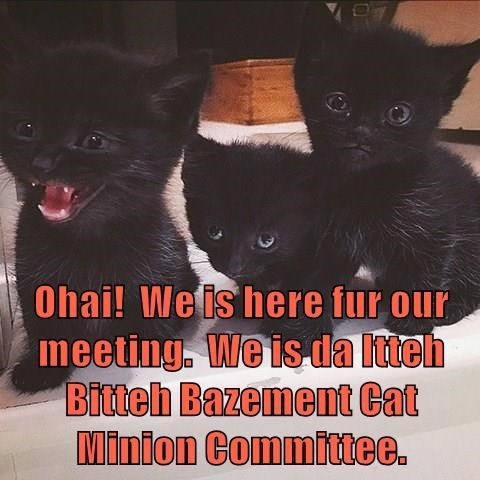 basement cat,minions,meeting,kitten,Cats