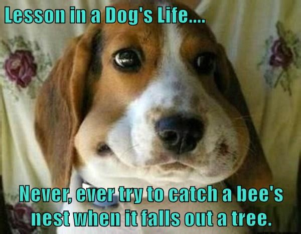dogs,lesson,bee,tree,caption