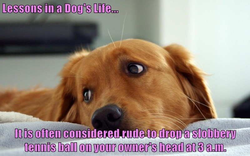 animals dogs bed lesson caption rude - 8801637632
