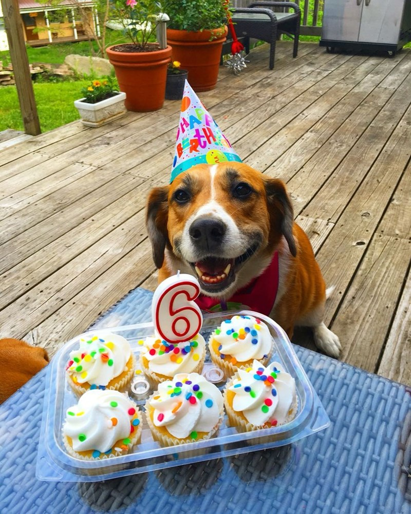 Yesterday was my dogs birthday.