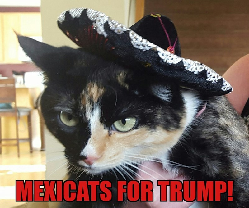 cat donald trump republican - 8801727744