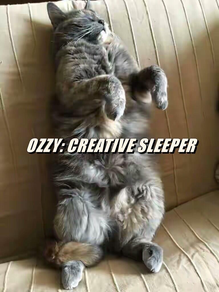 OZZY: CREATIVE SLEEPER