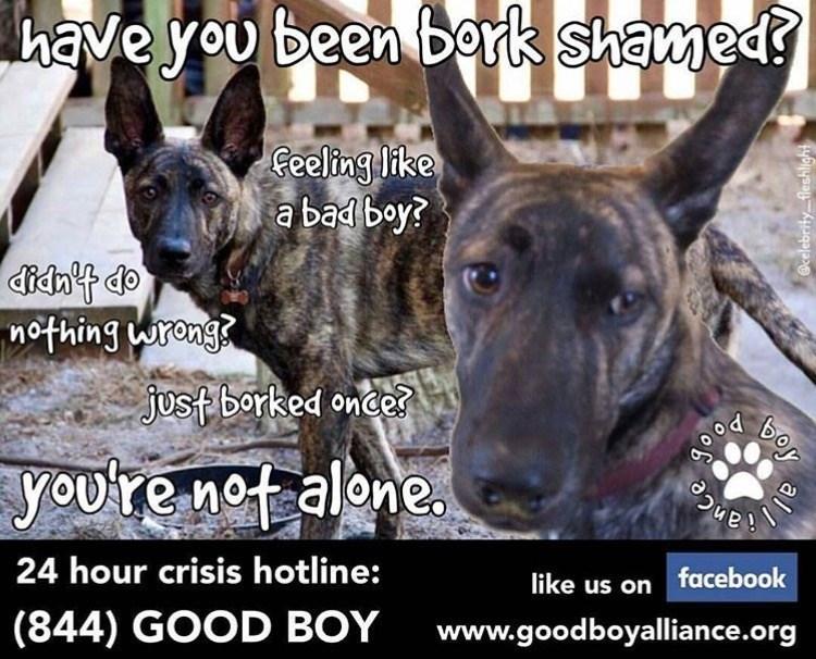 bork shaming is not okay