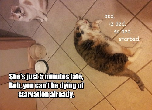 five,minutes,starved,empty,food,caption,late,bowl,Cats
