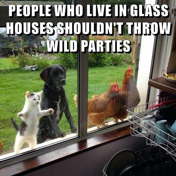 cat,dogs,glass,parties,caption,houses,animals,wild