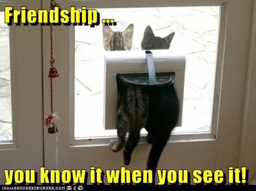 Friendship ... you know it when you see it!