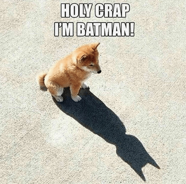 dogs DC cute superheroes batman funny - 8802388992