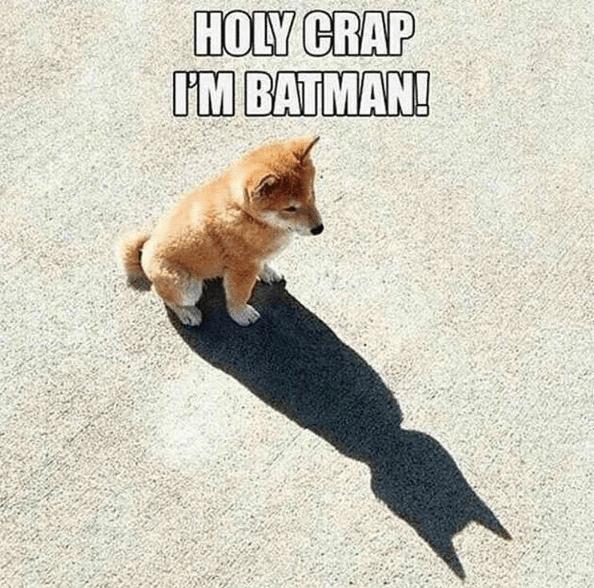 dogs DC cute superheroes batman funny - 8802388992