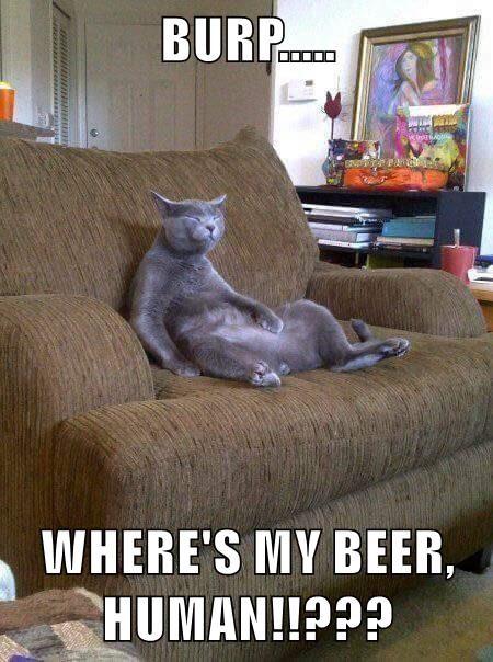 animals beer cat human where caption - 8802409984