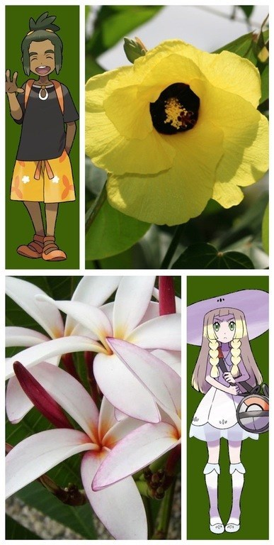 pokemon-sun-and-moon-discovery-hawaii-flowers-names