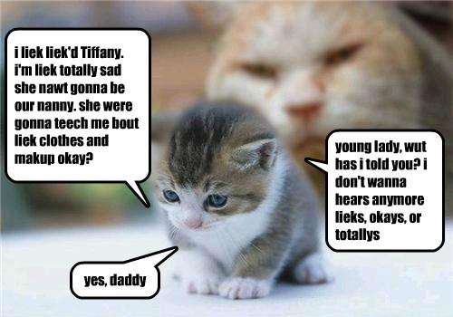 cat,totallys,okays,kitten,likes,caption