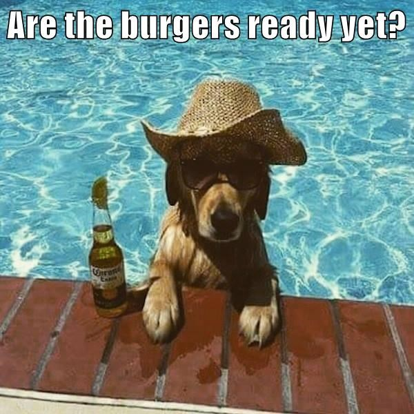 dogs,swimming,caption,burgers
