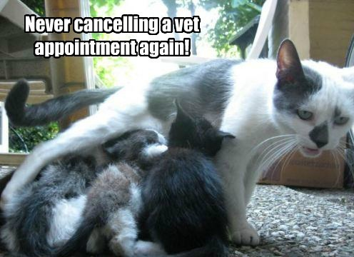 appointment spay kitten vet caption Cats - 8802566912