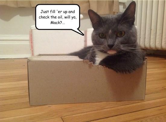 cat up caption check - 8802568192