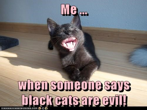 Me ... when someone says black cats are evil!