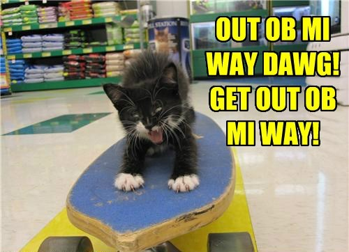 cat,kitten,dawg,skateboard,caption