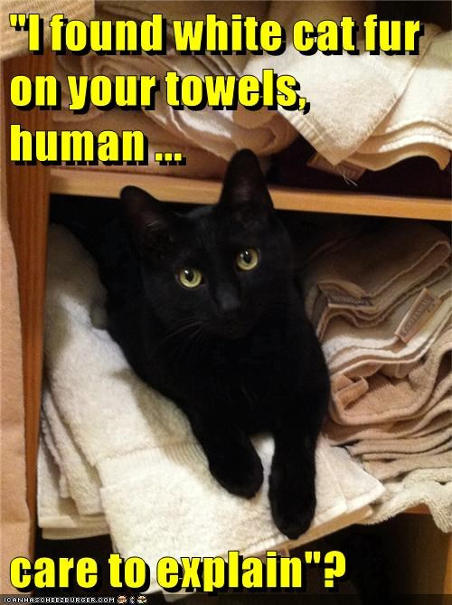 basement cat,fur,towel,caption,Cats