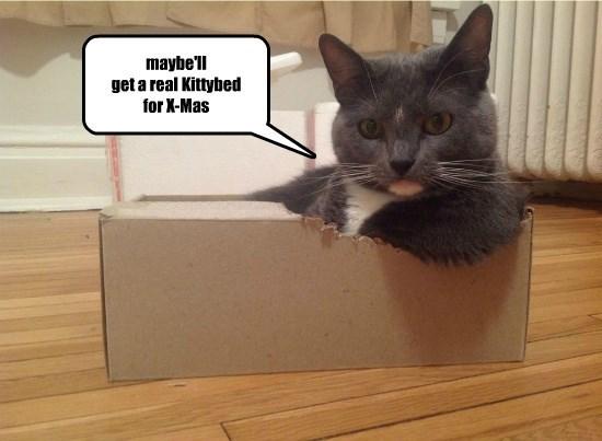 bed box maybe caption Cats - 8802593024