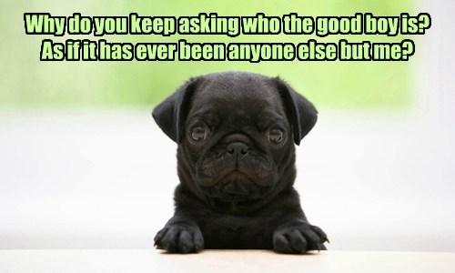 dogs pug good boy caption - 8802601984