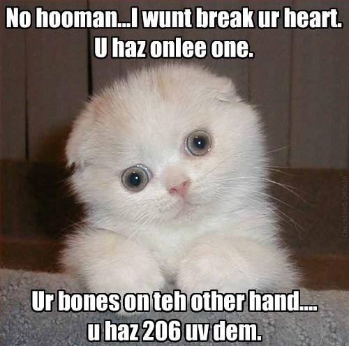 bones creepy caption break Cats - 8802619648