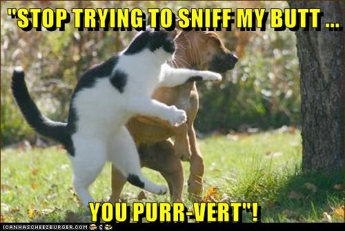 animals cat butt dogs sniff caption stop trying pervert - 8802645760