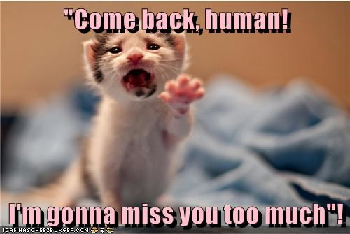 animals miss you kitten caption Cats - 8802646272