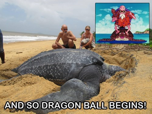 turtles dragonball z funny - 8802659584