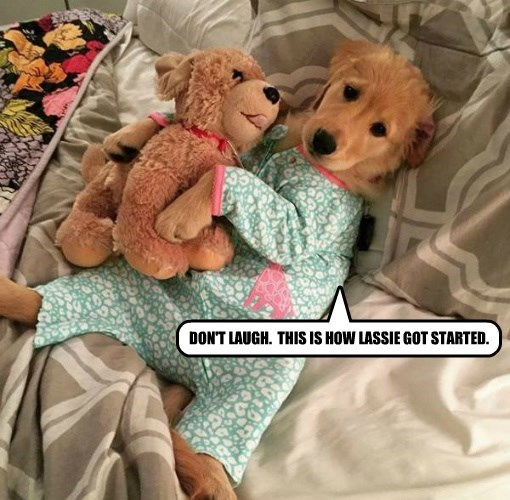 dogs puppy pajamas caption lassie