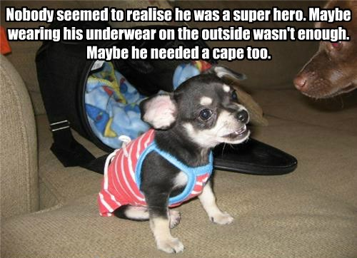 cape,realise,puppy,nobody,caption,super hero,underwear