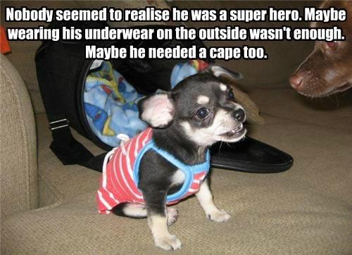 cape puppy nobody caption super hero underwear - 8802741504