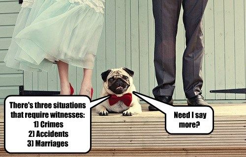 dogs crimes witnesses accidents caption marriages - 8802741760