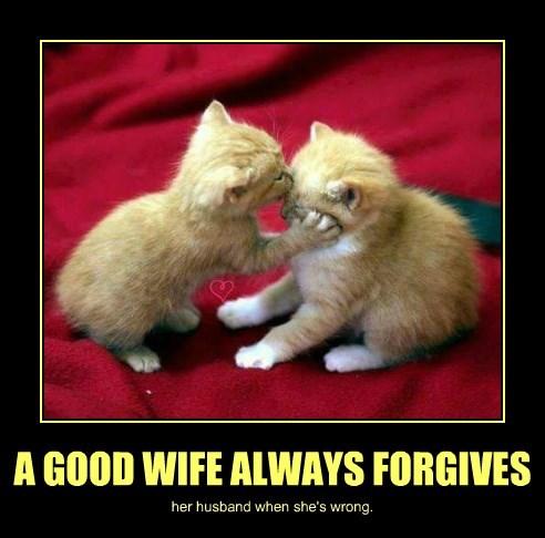 forgives wife kitten wrong husband good caption - 8802746368