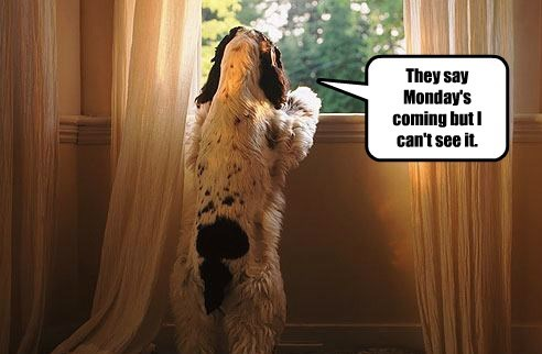 dogs see caption monday - 8802756096