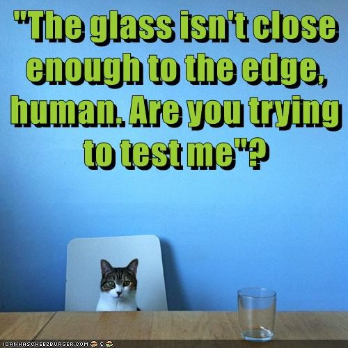 animals glass test caption Cats - 8802759936