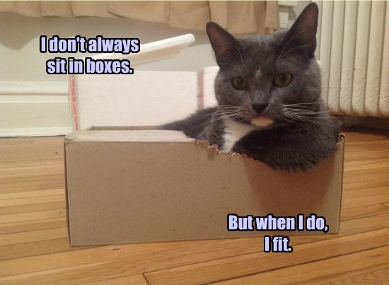 cat fit always boxes sit dont caption - 8802793984