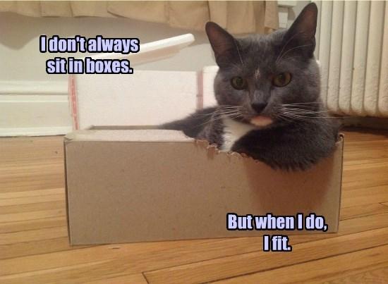 cat fit always boxes sit dont caption - 8802793984