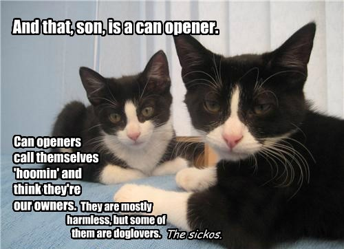 human,caption,Cats,can opener