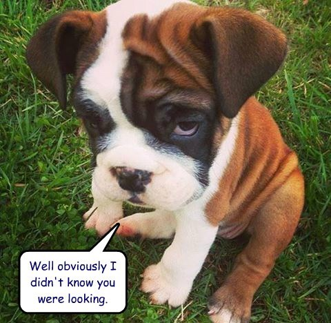 know puppy looking caption guilty - 8802800640