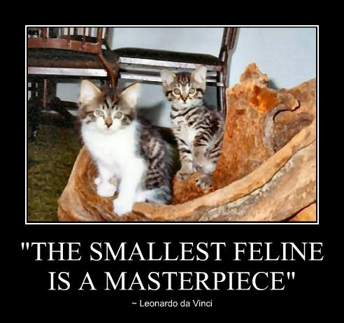 """THE SMALLEST FELINE IS A MASTERPIECE"""