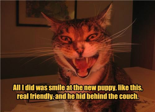 cat,puppy,couch,behind,hid,friendly,caption,smile