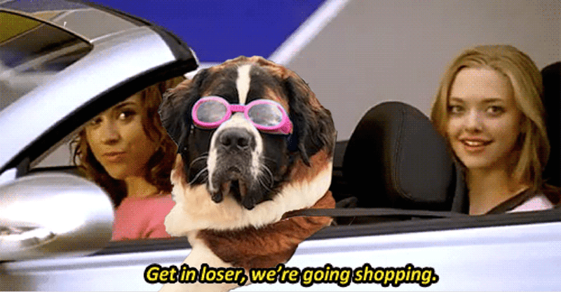 dogs shopping Movie mean girls loser caption - 8802837504