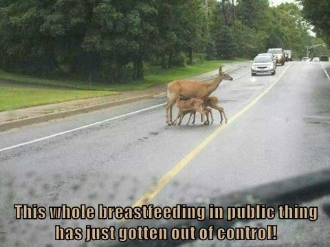 This whole breastfeeding in public thing has just gotten out of control!