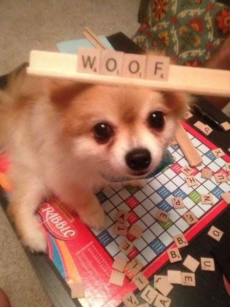 dogs woof scrabble - 8802891776