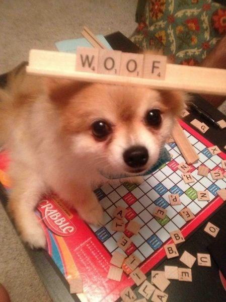 dogs woof scrabble - 8802891776