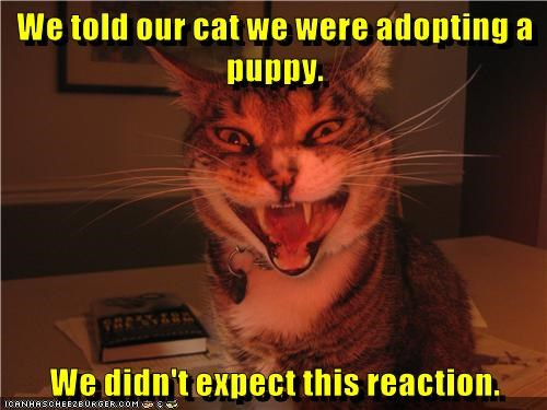 animals face caption reaction Cats - 8802957056