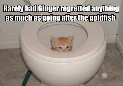 Rarely had Ginger regretted anything as much as going after the goldfish.