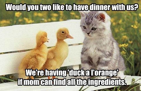 Would you two like to have dinner with us? We're having 'duck a l'orange' if mom can find all the ingredients.