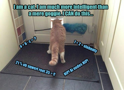 I am a cat. I am much more intelligent than a mere goggie. I CAN do this... a + b - c = ? 1 + 2 = elebenty 21 % ob sqwerl root 35 = !! NIP! Ai nedes NIP!