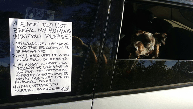 dogs car note break window